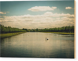 Hampton Court Long Lake's Swans - Wood Print
