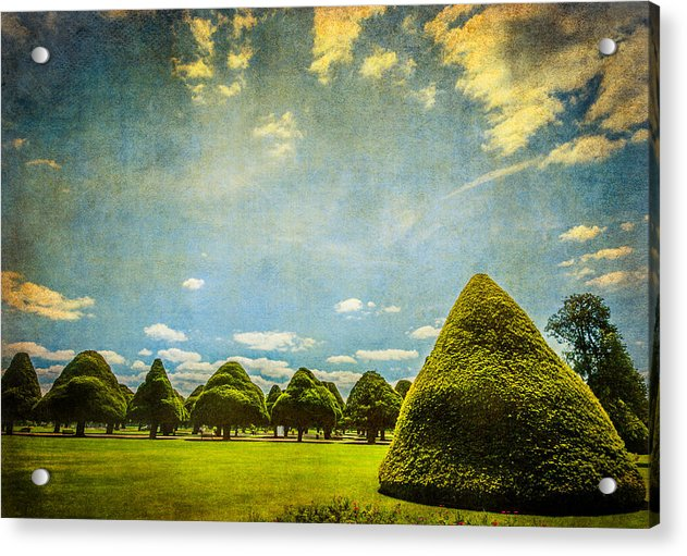 Triangular Trees 001 - Acrylic Print