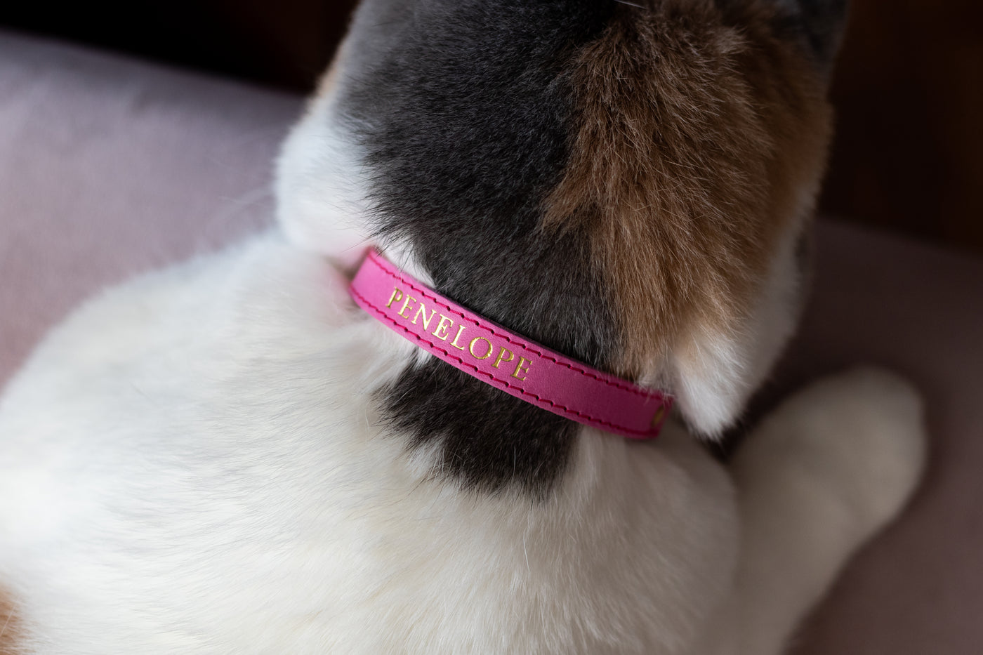 Personalised Collars
