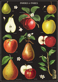 "Cavallini Wall Art / Wrapping Paper. Pommes et Poires.   . Printed on Archival Quality, Italian Laid Paper. 27"" x 19""."