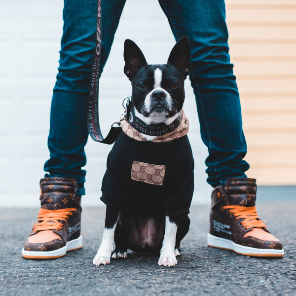 The Best Essential Dog Gear and More for Your Pet