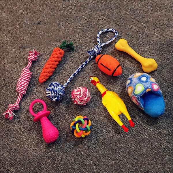 Assorted Sensory Toys for Dogs