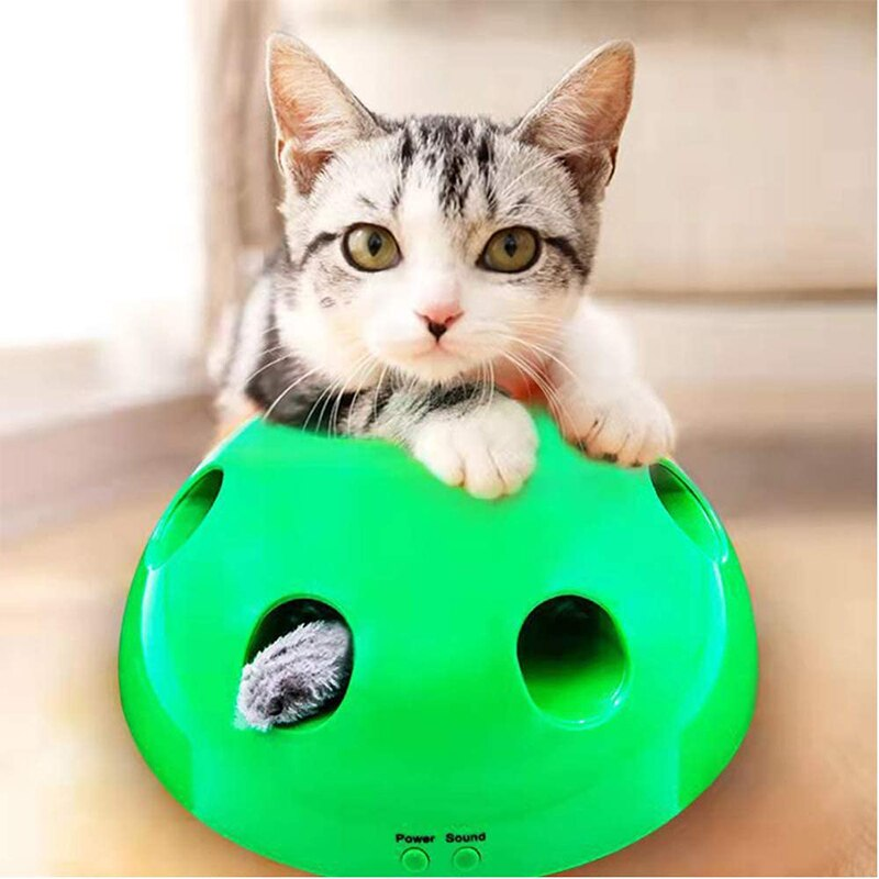 Interactive Cat Training Tool
