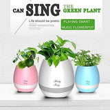 Smart Festival Gift Flower Pot, Play Piano on a Real Plant.
