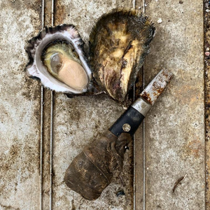 Load image into Gallery viewer, Sydney Rock Oysters - Shucked Dozen