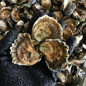 Load image into Gallery viewer, Sydney Rock Oysters - Live (Unshucked) Dozen