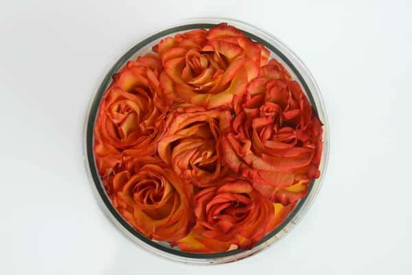 Clear round rose box small size with premium orange roses lined with green leaves