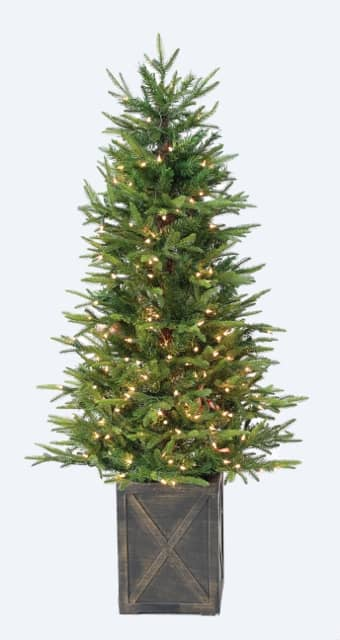 4' Ultra-Lit Wellington Fir Clear