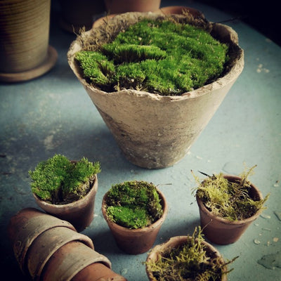 Teeny French Seedling Pots