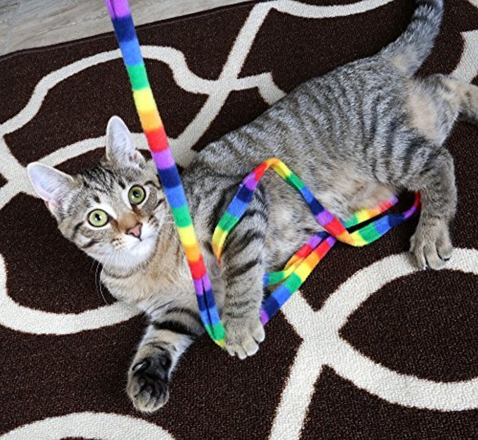 Safe, Durable, Colorful Rainbow Cat Charmer
