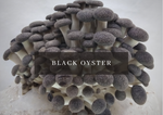 Load image into Gallery viewer, Mushroom Grow Kit - Black Pearl King Oyster