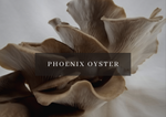 Load image into Gallery viewer, Mushroom Grow Kit - Phoenix Oyster