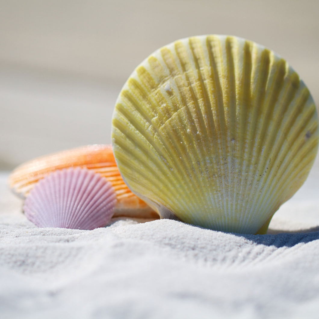 Lesson plan: Healthy ocean snack time (3 lessons)