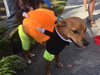 Dog Pumpkin Halloween Costume - bightstore