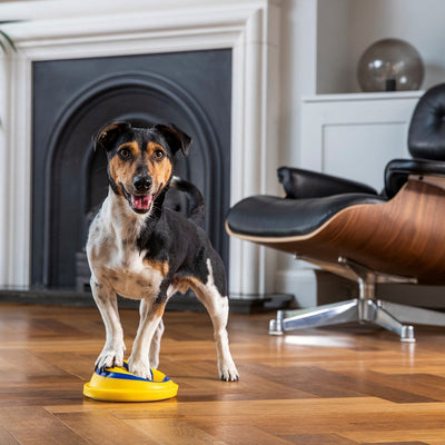 Woof Glider - Soft and safe indoor play toy for dogs - absoluteyours