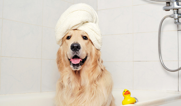Can I Use Human Shampoo on a Dog?