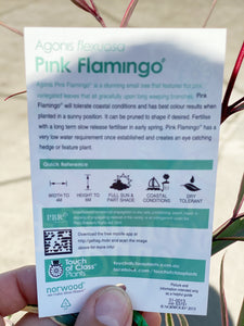 Pink flemingo box