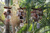 NEW Balinese Shell Windchime / Mobile - 3 SIZES AVAILABLE...  Gorgeous