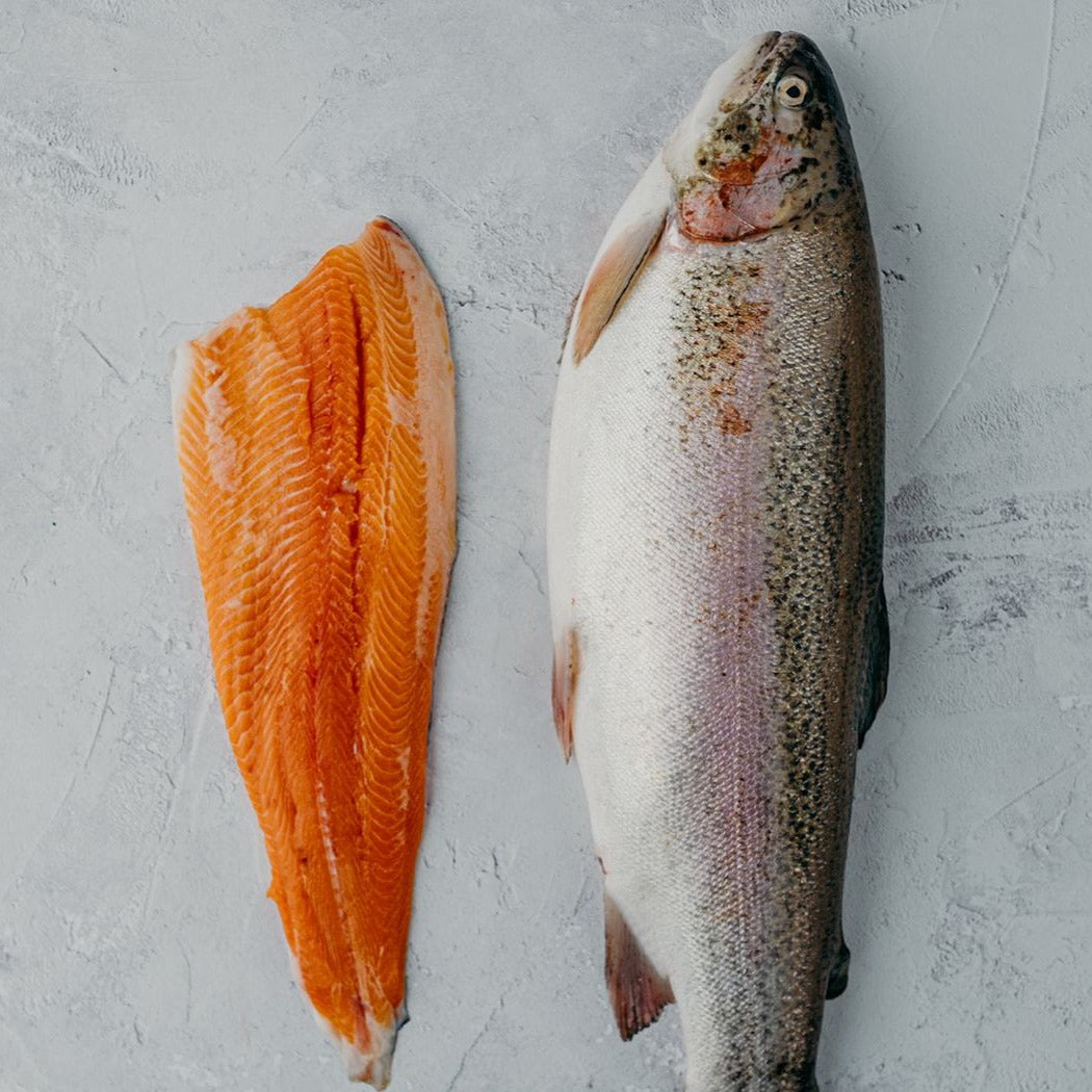 Ikejime Chalk Stream Trout Fillet