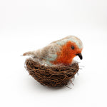 Engligh Robin in Nest