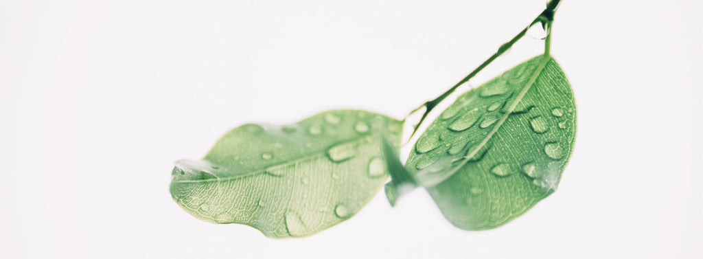 Why Pure Air - Don't just filter the air – actively purify it with pureAir by GreenTech.