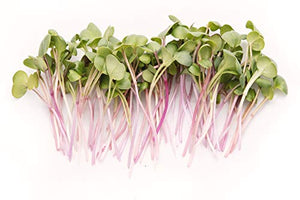 Rainbow Radish Sprouting Seeds Mix | Heirloom Non-GMO Seeds for Sprouting & Microgreens | Contains Red Arrow, Purple Triton & White Daikon Radish Seeds 1 lb Resealable Bag | Rainbow Heirloom Seed Co.