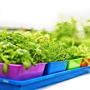 5x5 Seed Tray Multi Color - 40 Pack