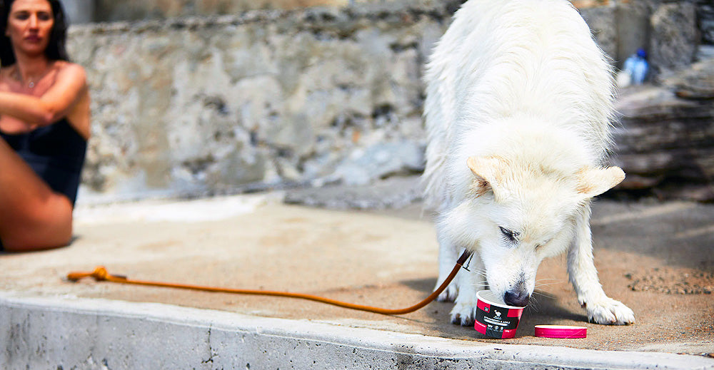 Are there any benefits to giving iced treats to dogs?
