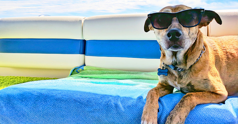 Have a great beach summer holiday with your woof