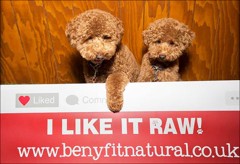 Know The Raw Dog Food Varieties Available