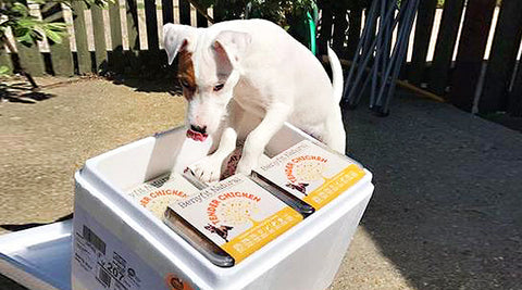 Making The Switch To Natural Dog Food