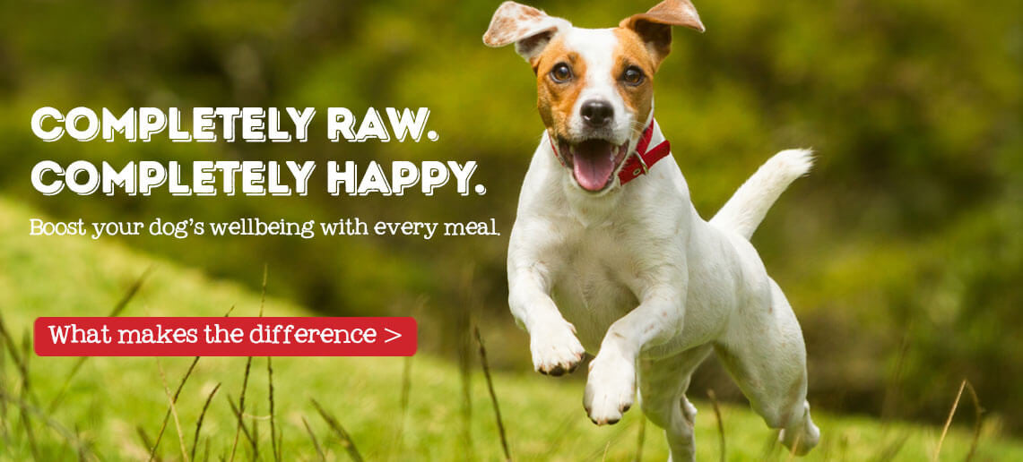 Raw Dog Food Uk Best Raw Dog Food Brand Complete Raw Dog Food