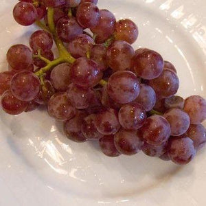 Grape Reliance Seedless