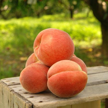 Peach Giant Elberta