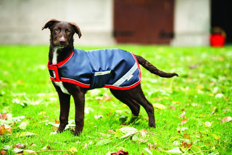 Rambo Waterproof Dog Rug 100g - The Tack Shop of Lexington