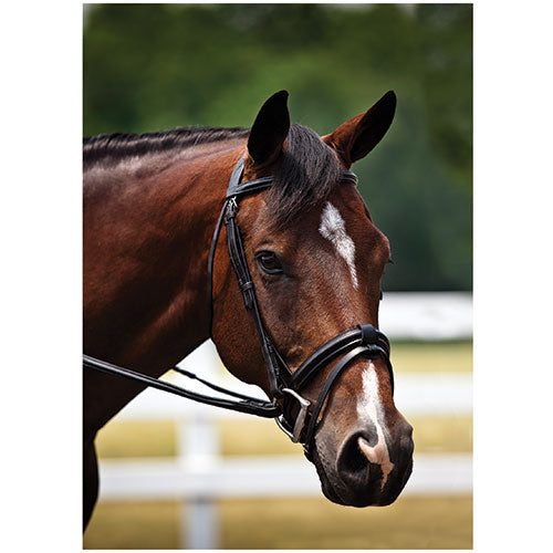 GT Reid Fancy Stitched Bridle with Comfort Crown