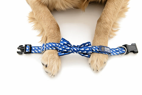 Barrel Down South Dog Bowtie Collars