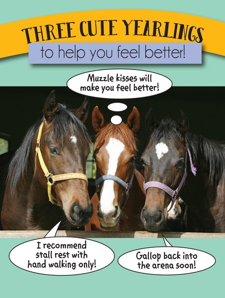 Three Cute Yearlings to help you feel better card
