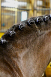 SPICED Rhinestone Braid Bling