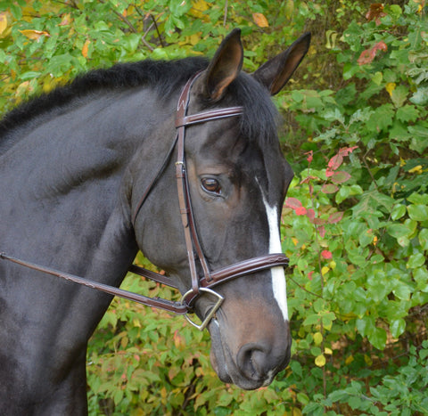Black Oak Cyprus Bridle