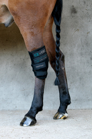 Ice-Vibe Hock Boot - The Tack Shop of Lexington
