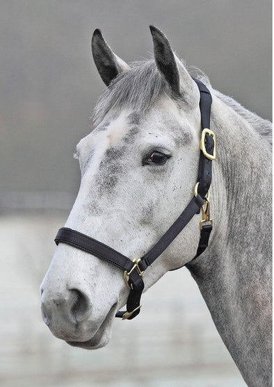 Shires 'Topaz' Leather Breakaway Nylon Halter - The Tack Shop of Lexington
