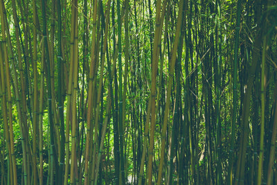 Why Is Bamboo Our Favorite Sustainable Resource?