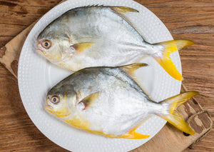 Deep Sea Golden Pompano 深海金鯧魚 (Frozen 1 Pc)
