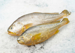 Yellow Croaker 冰黃花魚 (Frozen, 300g)