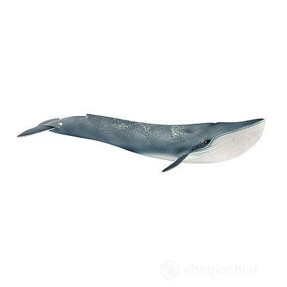 Wild Life Blue Whale