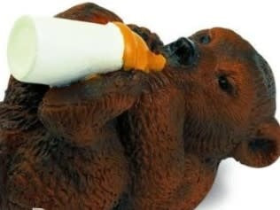 Bear Cub with Bottle