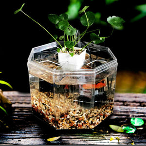 Four-Block Aquaponic Mini Betta Fish Tank