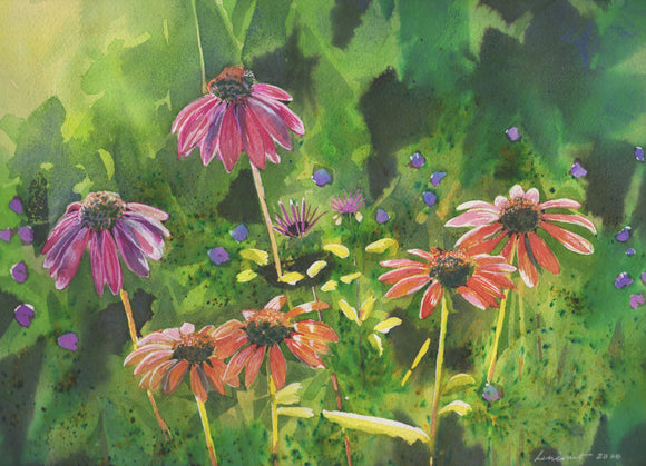 watercolor painting of coneflowers in pink and orange against a green leafy background with sun streaming from the left.