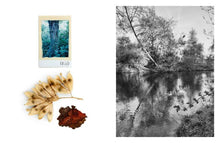 Load image into Gallery viewer, Regina Anzenberger / Shifting Roots
